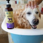 Refreshing Bath with RELIQ Mineral Spa Dog Shampoo