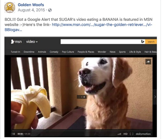 Golden Woofs video msn.com