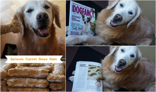 Golden Woofs Featured in Dog Fancy Magazine