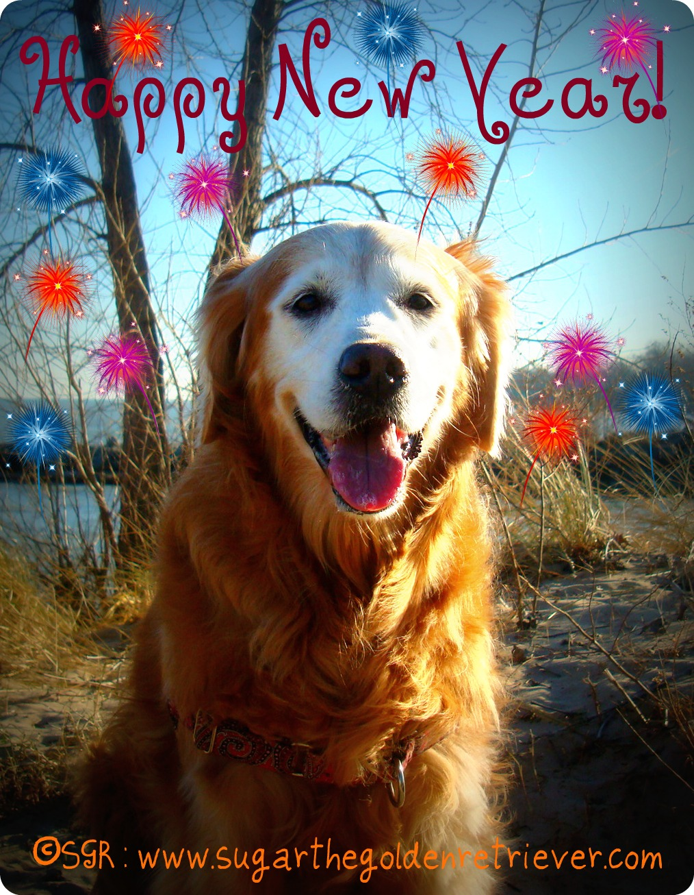 Happy New Year Golden Woofs
