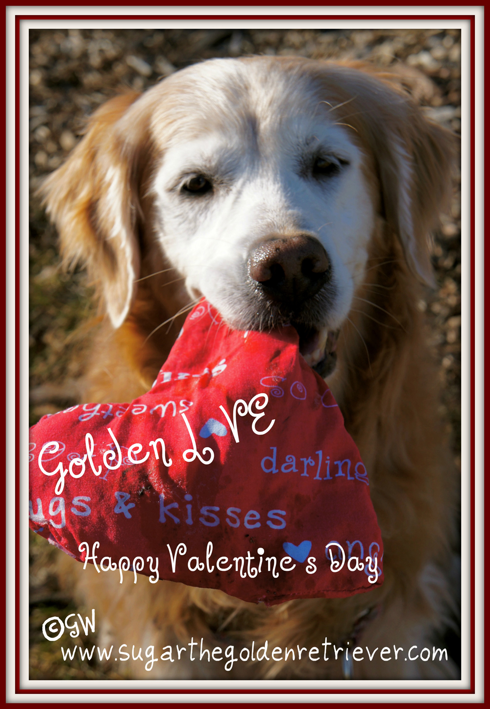 Sugar's Valentine's Day Greeting