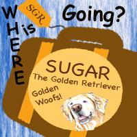 sugar the golden retriever