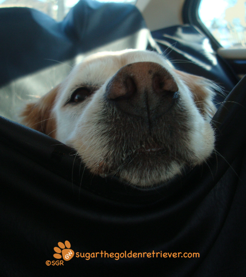 Sugar during a Car Ride
