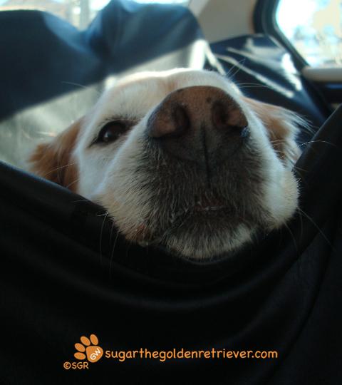 Sugar during a Car Ride