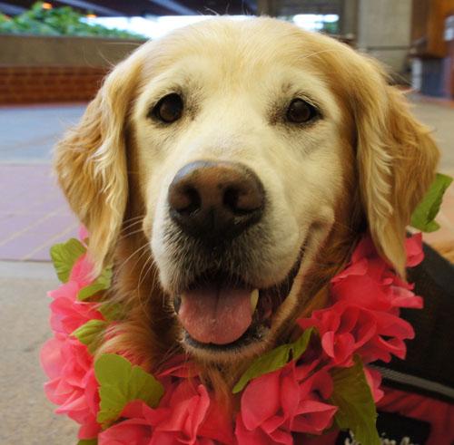 Sugar's 1st Photo in Maui Hawaii 3/27/12