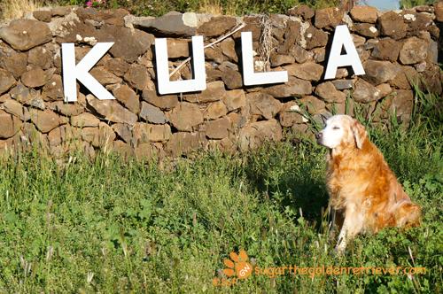 Sugar at KULA Sign