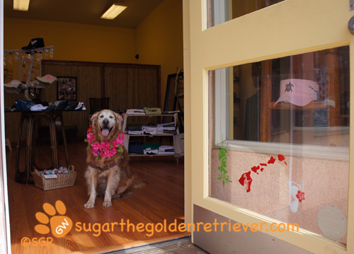 Sugar the Golden Retriever Offical Greeter of Simply 808