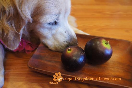 Sugar Smelling Star Apple