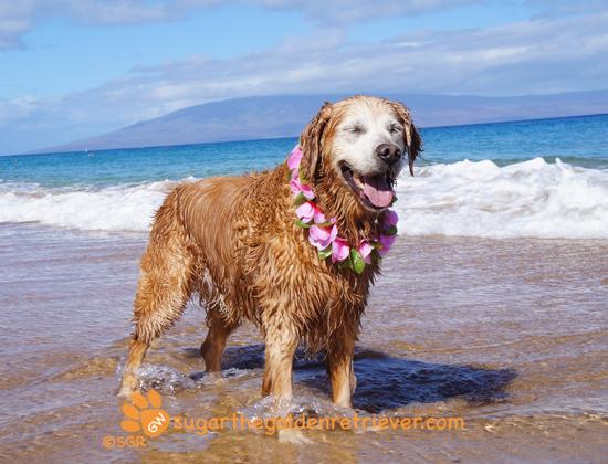 Sugar Golden Moment: June 1st Aloha Friday