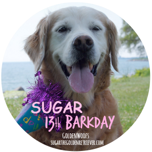 SUGAR 13th Barkday badge