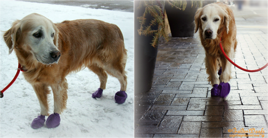Youtube Dogs Walking In Boots For The First Time