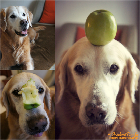 Can Dogs Have Granny Smith Apples