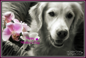 Mother's Day Orchid: Sugar The Golden Retriever