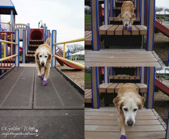 Playground Bridge Steps: Sugar The Golden Retriever