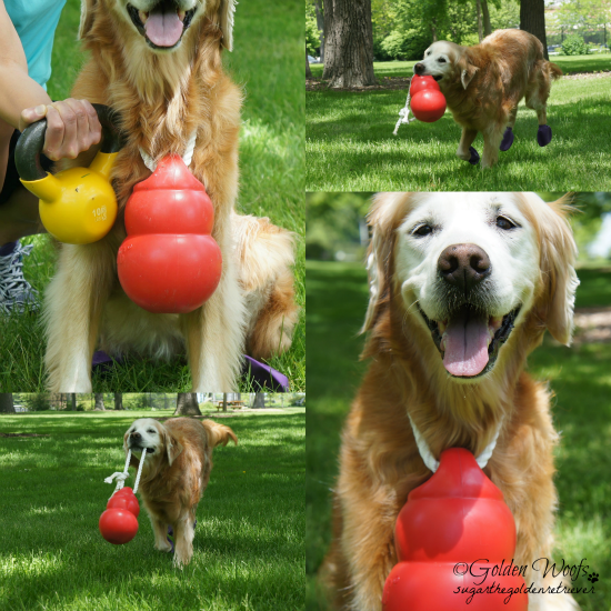 Tailor Your Fitness Accessories w/ Your Dog's Toy: Sugar The Golden Retriever.com