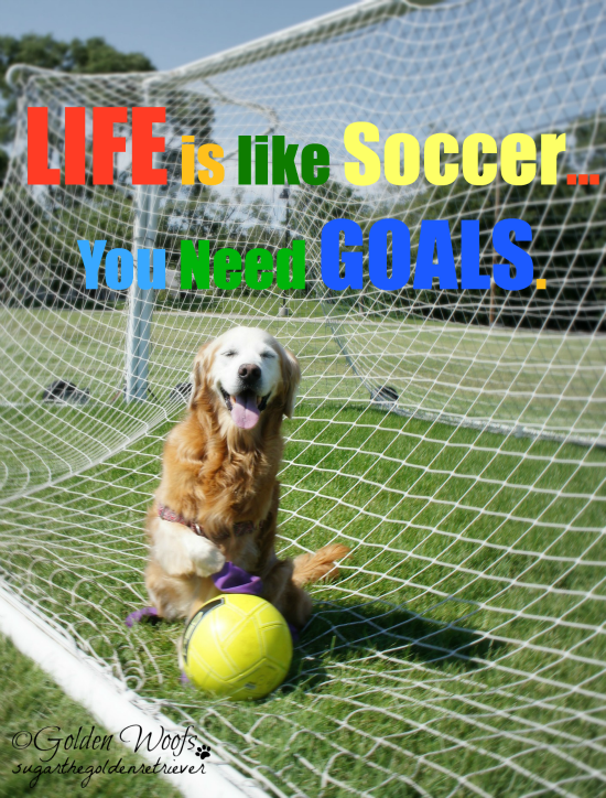 Life Is Like Soccer You Need Goals: Sugar The Golden Retriever