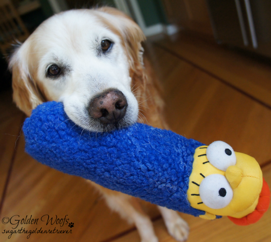 HartzPets Marge Simpson Head: Sugar The Golden Retriever