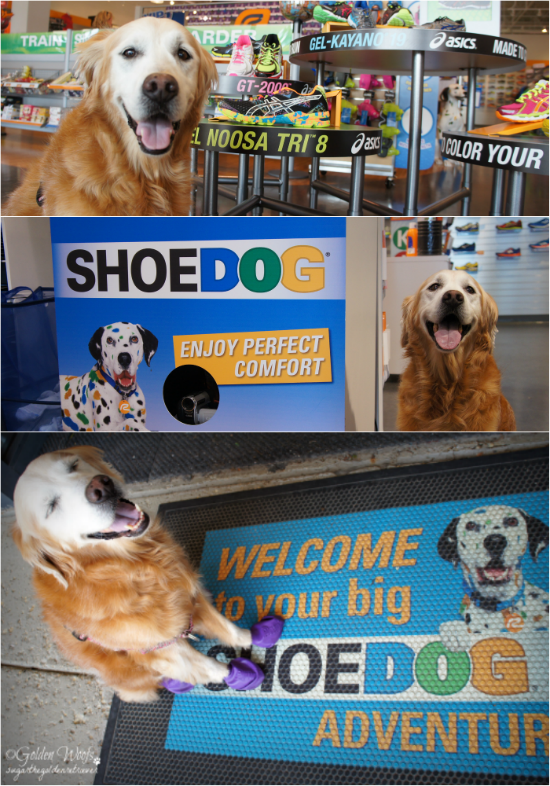 Road Runner Shoe Dog Adventure: Sugar The Golden Retriever