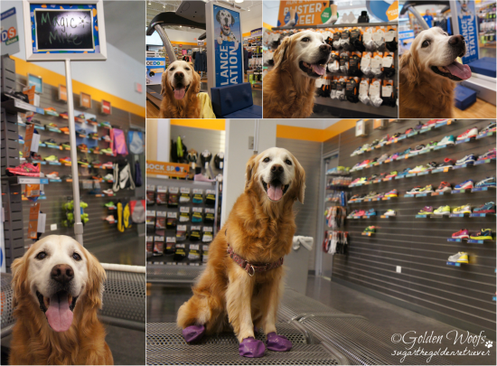 At Road Runner Sports: Sugar The Golden Retriever