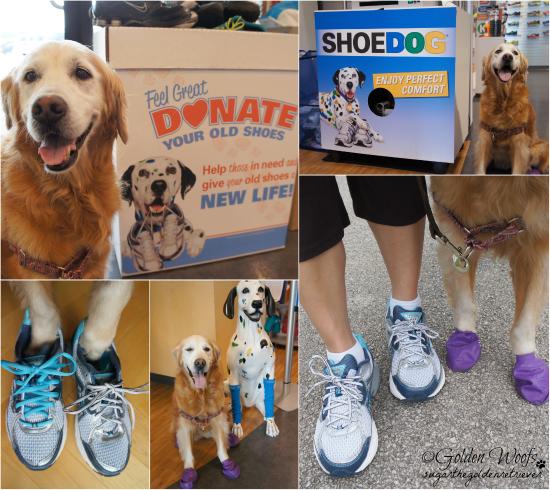 Road Runner Finding The Right Shoe: Sugar The Golden Retriever