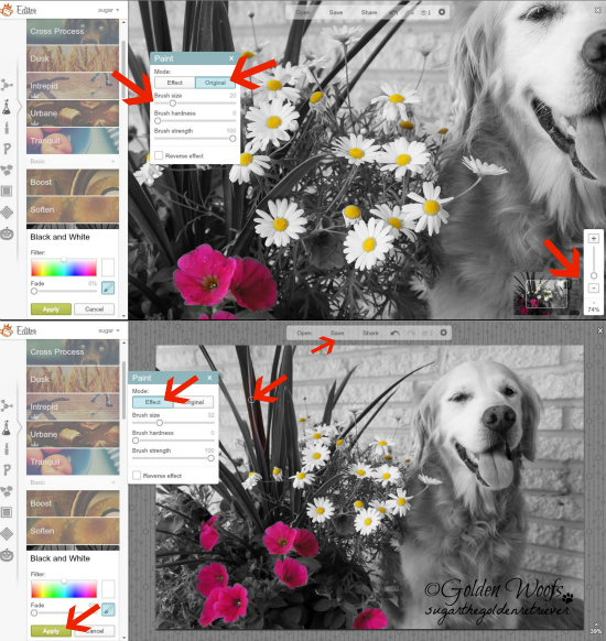 Add Splash of Colors with PicMonkey 3: Sugar The Golden Retriever