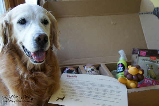 Pawalla Box: Sugar The Golden Retriever