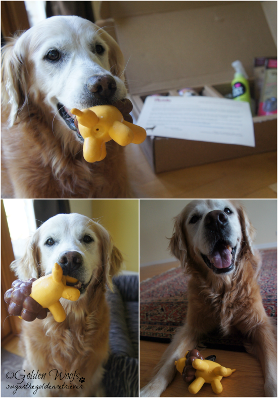 Lily, the Lion Toy: Sugar The Golden Retriever