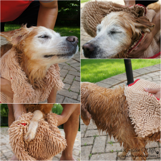 Got Soggy Doggy Super Shammy: Sugar The Golden Retriever