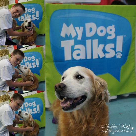 Ethan's My Dog Talks Sugar The Golden Retriever