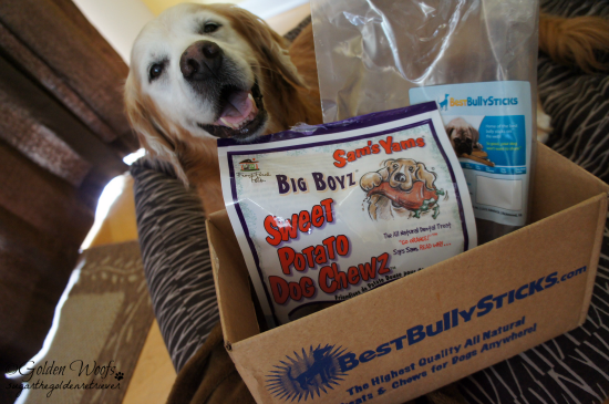 Best Bully Sticks Treats: Sugar The Golden Retriever