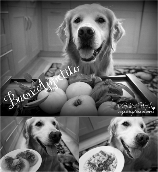 Buon Appetito: Sugar The Golden Retriever