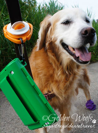 The Fifth Paw & Easy Scoop A Poop: Sugar The Golden Retriever