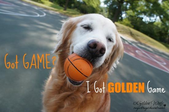 Got Golden Game! Sugar The Golden Retriever