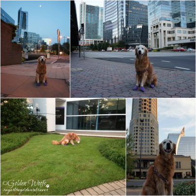 Sugar at Atlanta Buckhead