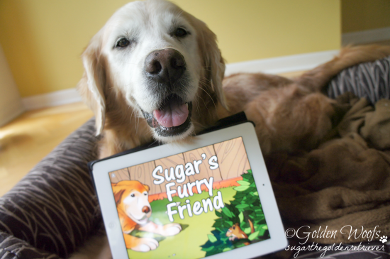 Sugar's Furry Friend: Sugar The Golden Retriever