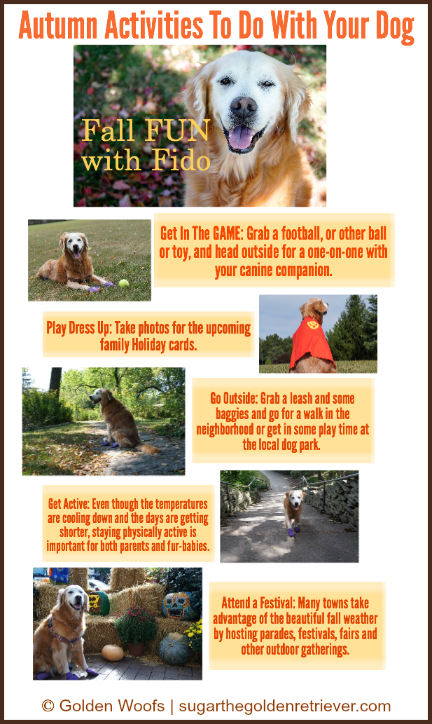 Fall FUN with FIDO Infographic