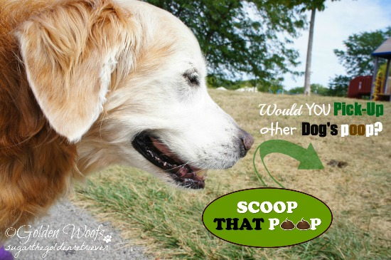 Would You Pick-Up Other Dog's Poop?