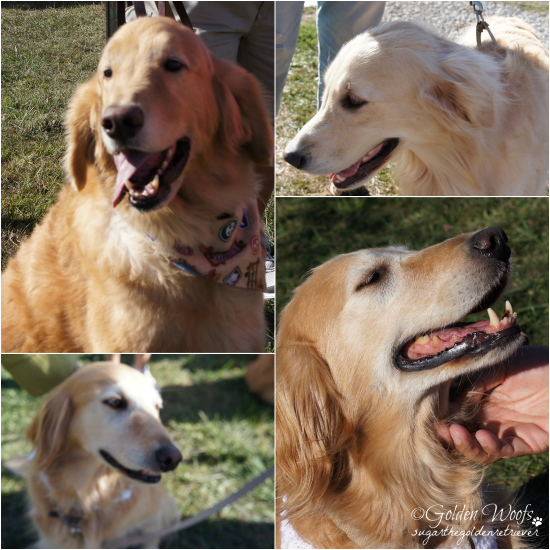 Senior Adoptable Dogs
