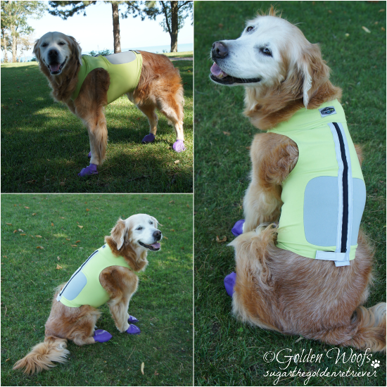 Sugar Wears K9FitVest from DogTread