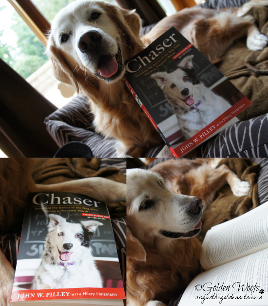 #Chaser1000: Unlocking The Genius of the Dog Who Knows a Thousand Words