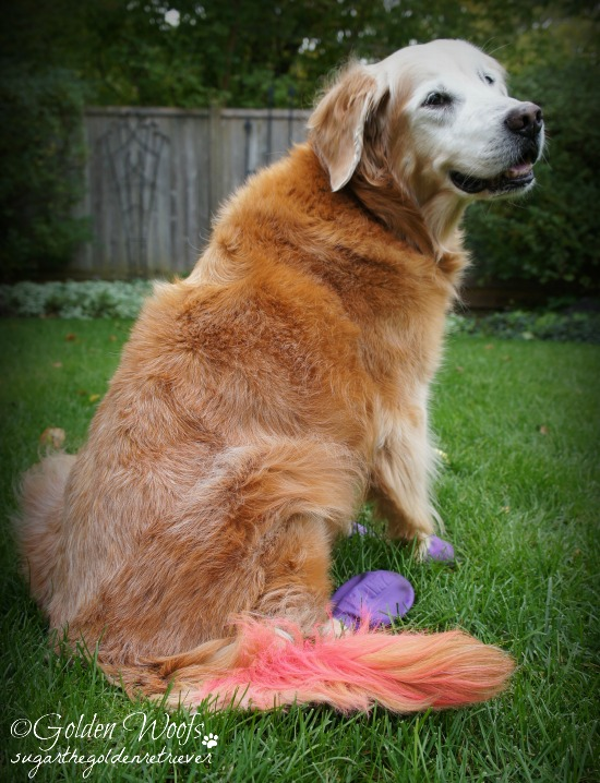 PINK Golden Tail
