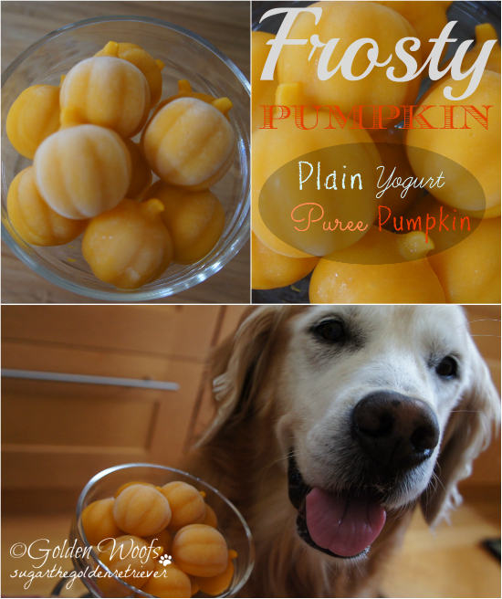 Frosty PUMPKIN: Sugar The Golden Retriever