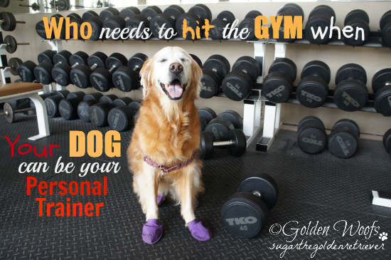 Your Dog can Be Your Personal Trainer
