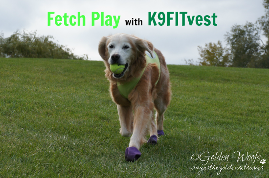 Sugar's Fetch Play with K9FITvest