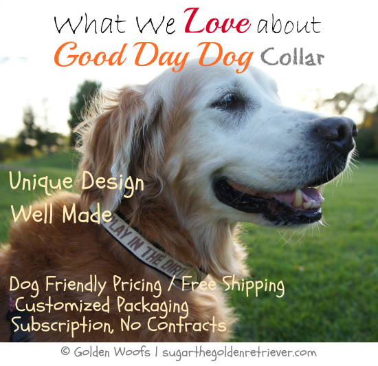 What We Love About Good Day Dog Collar