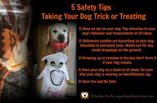 Safety Tips: Taking Your Dog Trick or Treating