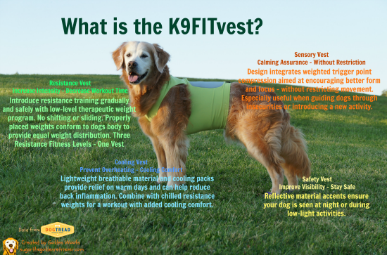 Golden Woofs: What is the K9FITvest? Inforgraphic