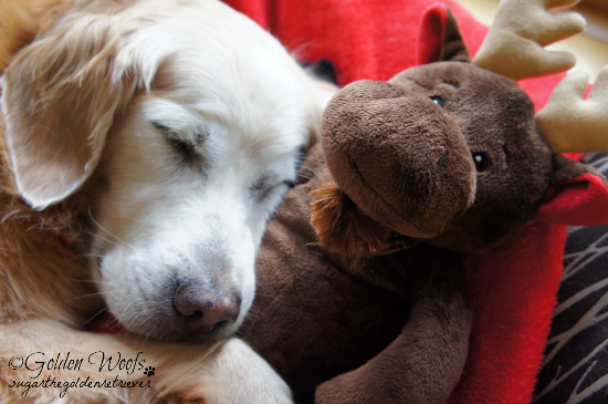 Sugar Sleeping w/ Petco Crazy About Pets Moose Toy
