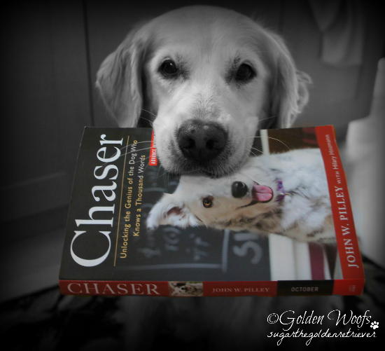 Sugar Got CHASER Book