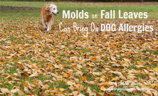 Molds On Fall Leaves Brings Dog Allergies
